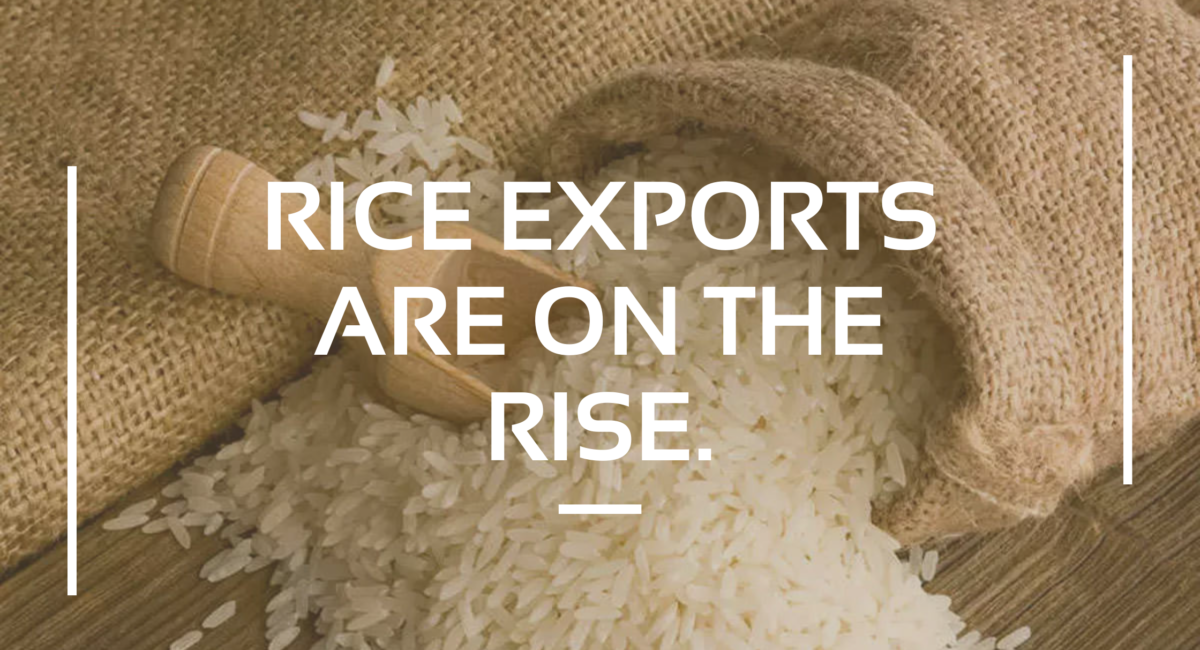 Rice_exports_are_on_the_rise.