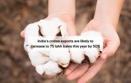 India's cotton exports are likely to grow to 75 lakh bales this year by 50 percent.